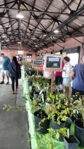 Cover photo for Master Gardener Fall Plant Sale