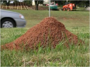 Cover photo for Fire Ant Control Workshops