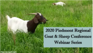 Cover photo for Online Goat & Sheep Conference Starts April 21