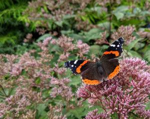 Cover photo for Enjoy an August Virtual Tour of the Pollinator Paradise Garden!